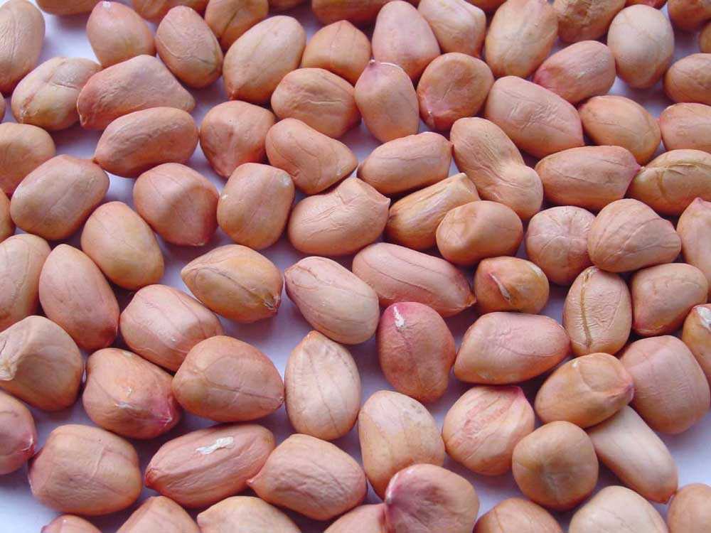 Groundnuts Peanuts  HPS - Hand Picked Selected
